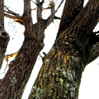 The Love Language of Tree Stumps