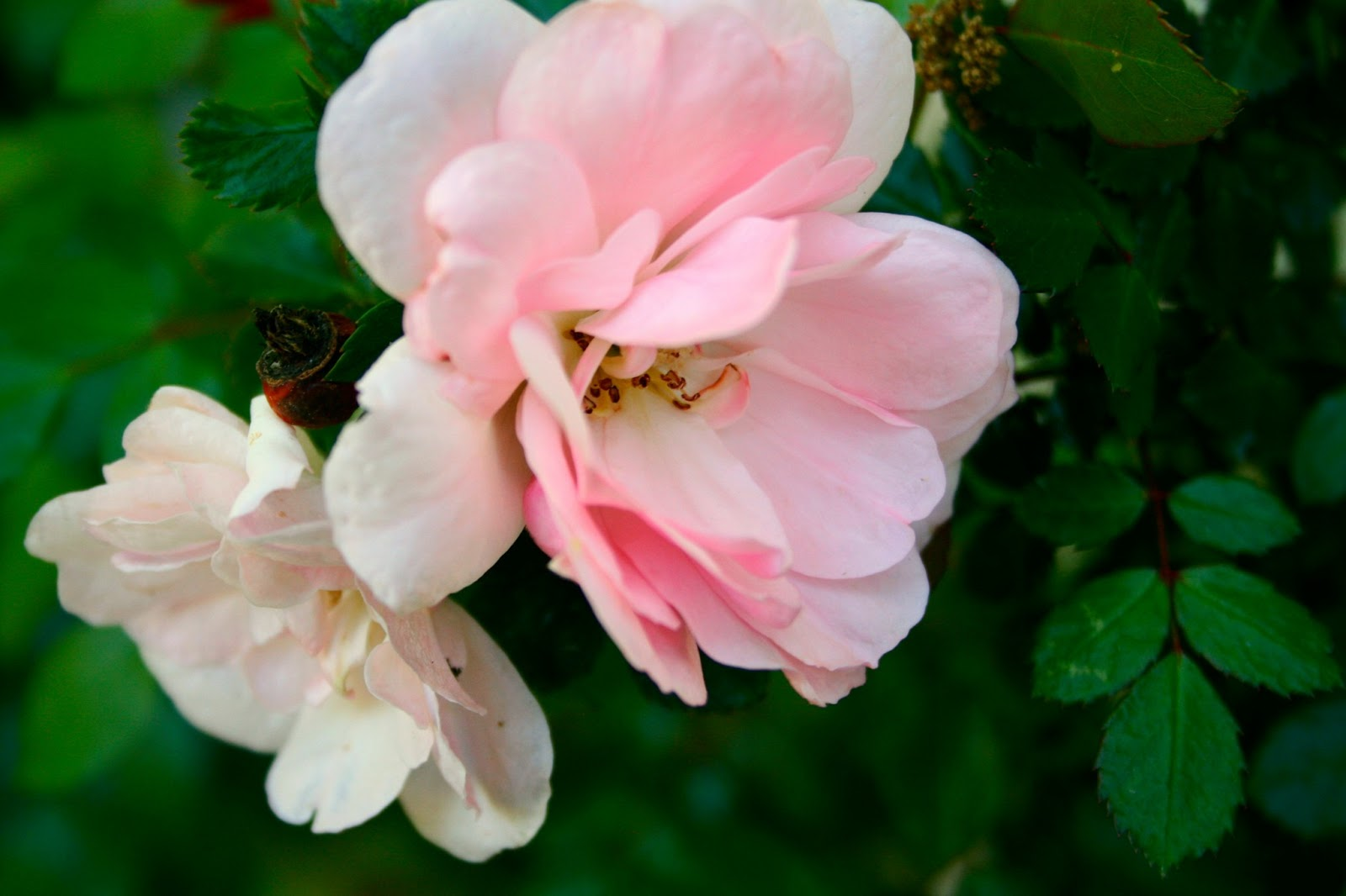 all the little flowlers say pick me! a little rambling…